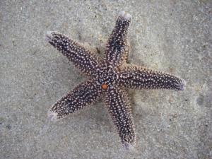 Fire Island 30Aug2011-9331